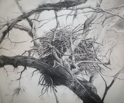 "View Image Details Abaondoned Eagles Nest, Charcoal on paper, H26"" x 36"""