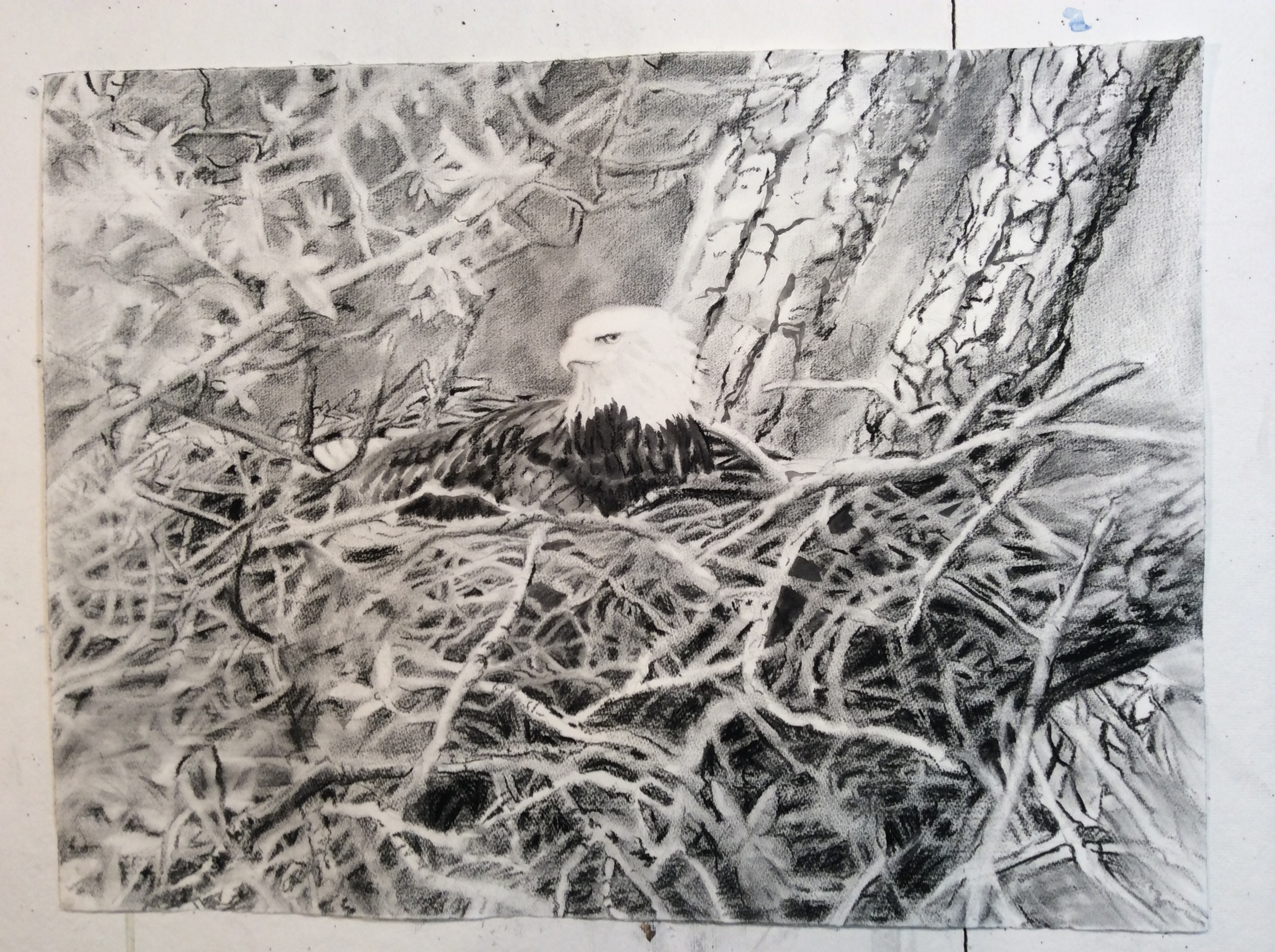 "View Image Details Occuppied Nest, Charcoal on Paper, H 36""x 42"""