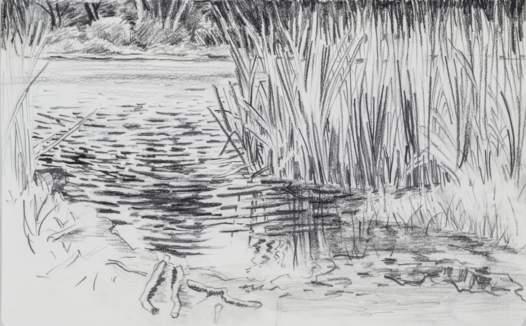 "View Image Details Reeds and Reflections, pencil on paper, H4"" x  W6"""